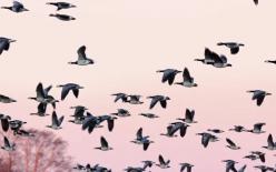 Bird navigation: The Quantum Around You. Ep1